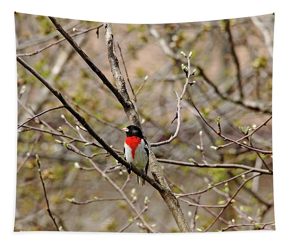 Rose Breasted Grosbeak Tapestry featuring the photograph Spring Grosbeak by Debbie Oppermann