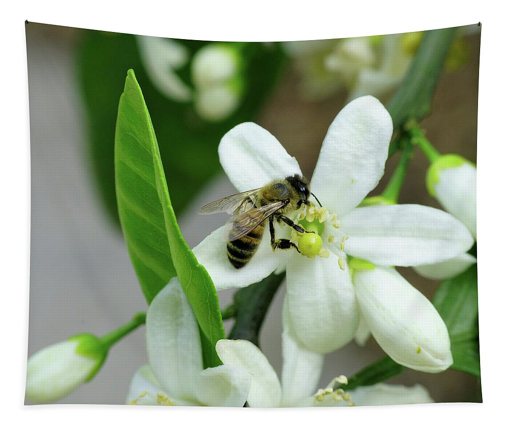 Save The Bees Tapestry featuring the photograph Spring Honey Bee Pollinates Orange Citrus Flower by Katrina Lau