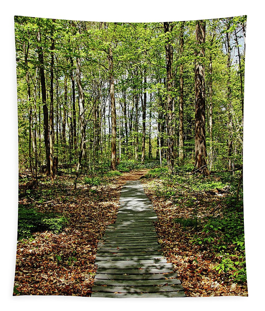 Spring Woods Tapestry featuring the photograph Spring Light And Shadow by Debbie Oppermann
