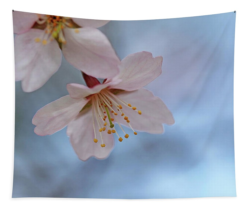 Cherry Blossoms Tapestry featuring the photograph Spring Pastels by Debbie Oppermann
