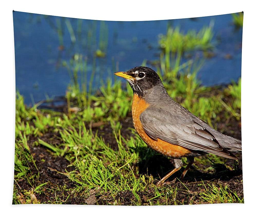 Spring Robin Tapestry featuring the photograph Spring Robin by Karol Livote