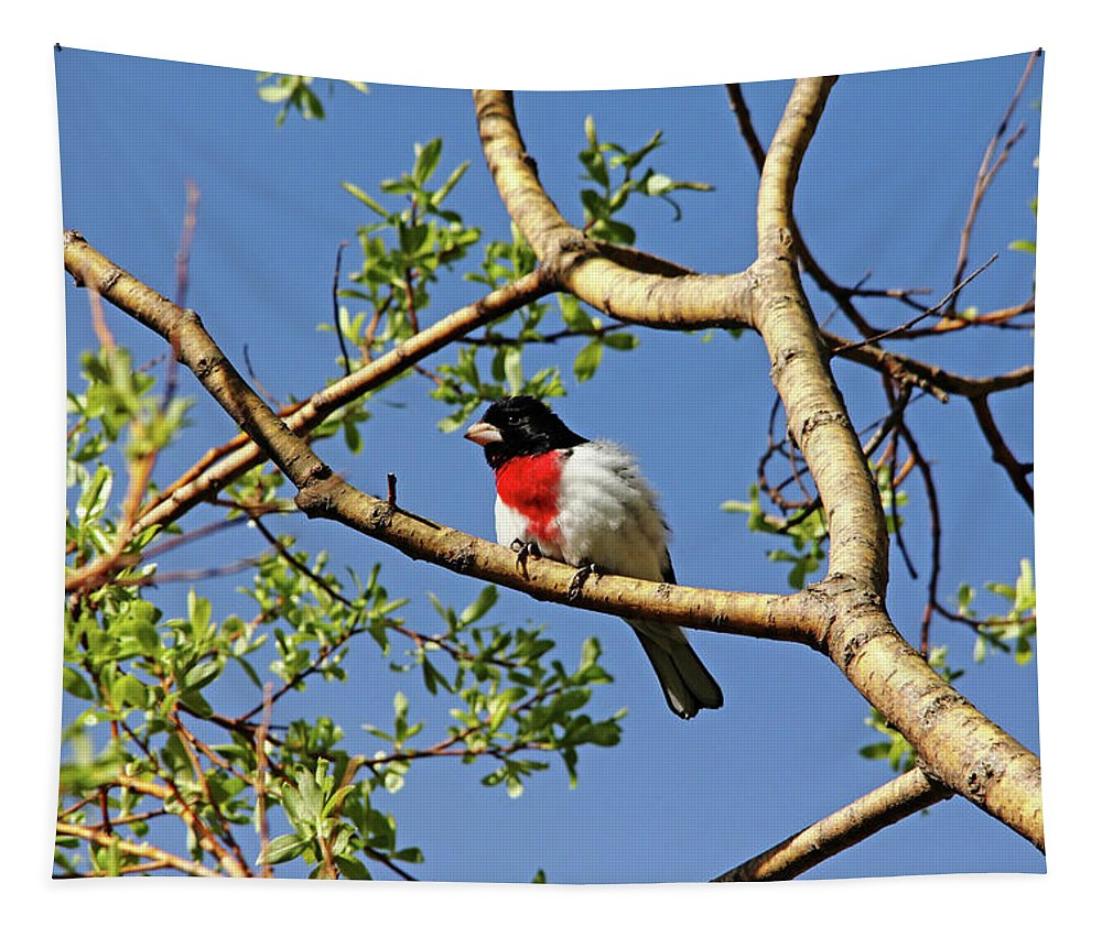 Rose Breasted Grosbeak Tapestry featuring the photograph Spring Rose Breasted Grosbeak by Debbie Oppermann