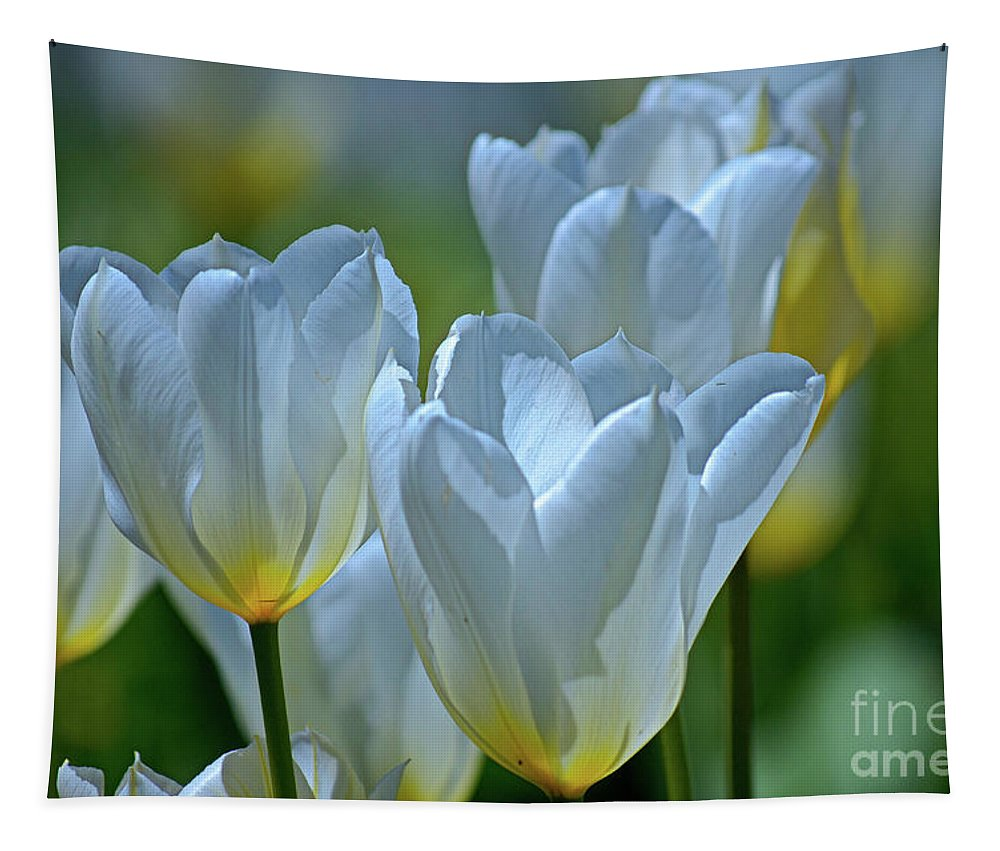 White Tulips Tapestry featuring the photograph Spring Tulips by Deb Halloran