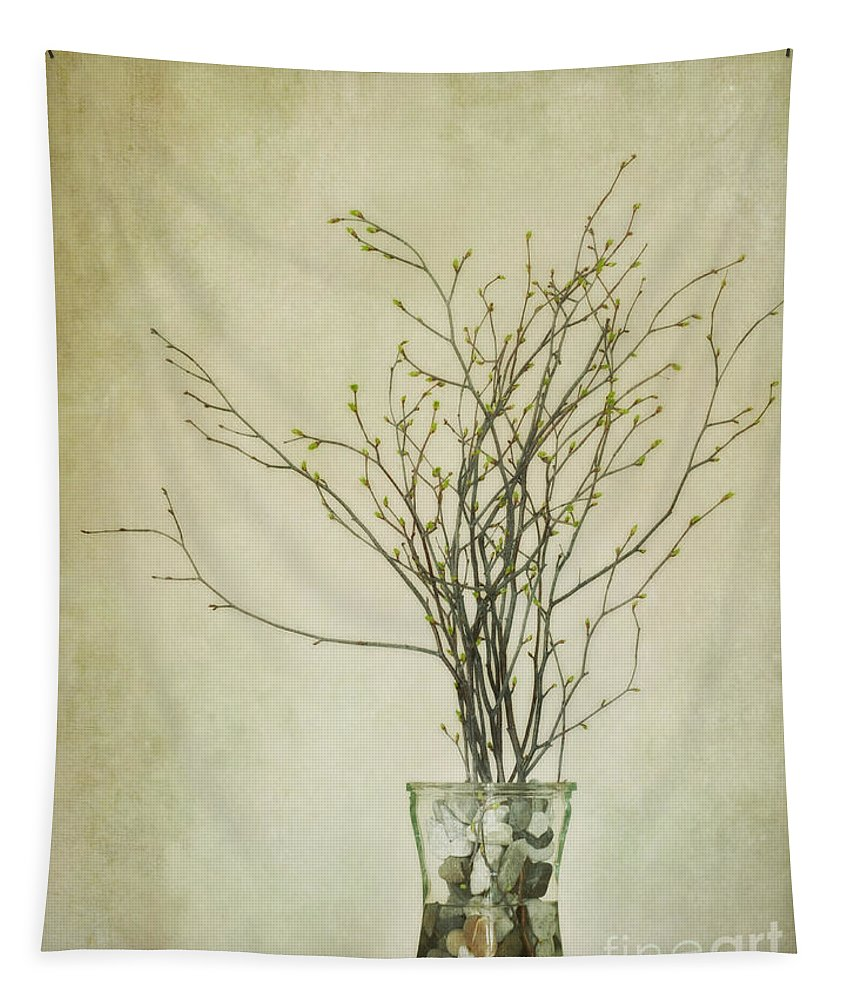 Birch Twigs Tapestry featuring the photograph Spring Unfolds by Priska Wettstein