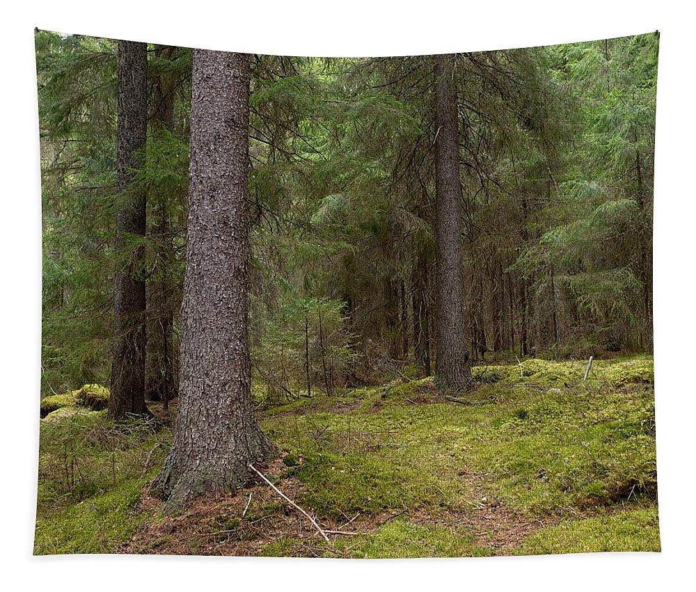 Lehtokukka Tapestry featuring the photograph Spruce Forest by Jouko Lehto