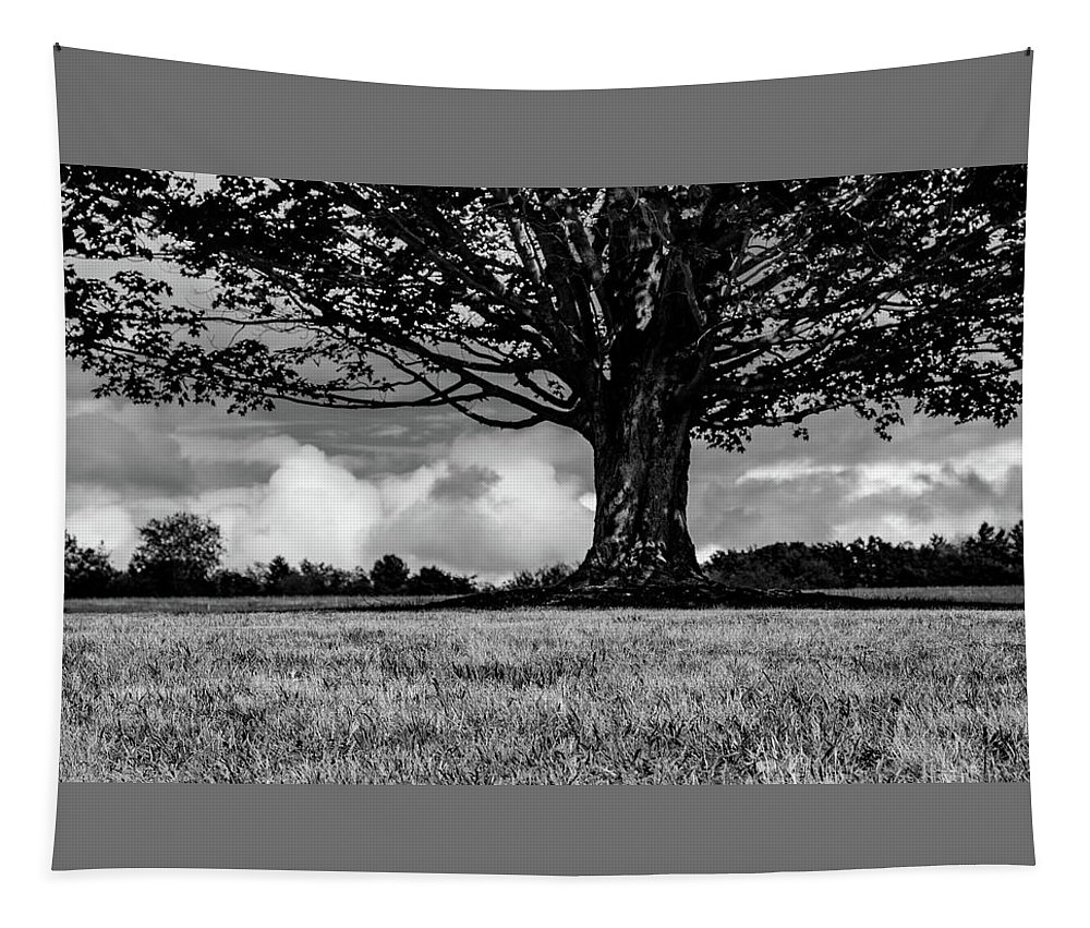Trees Tapestry featuring the photograph St. Benedict Abbey Single Tree In Summer by Michael Saunders