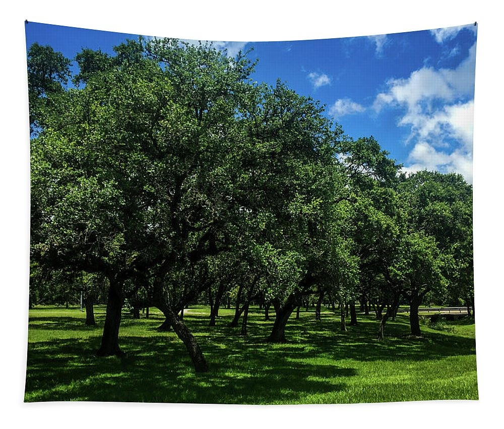Stand Of Oaks Tapestry featuring the photograph Stand Of Oaks by Debra Martz