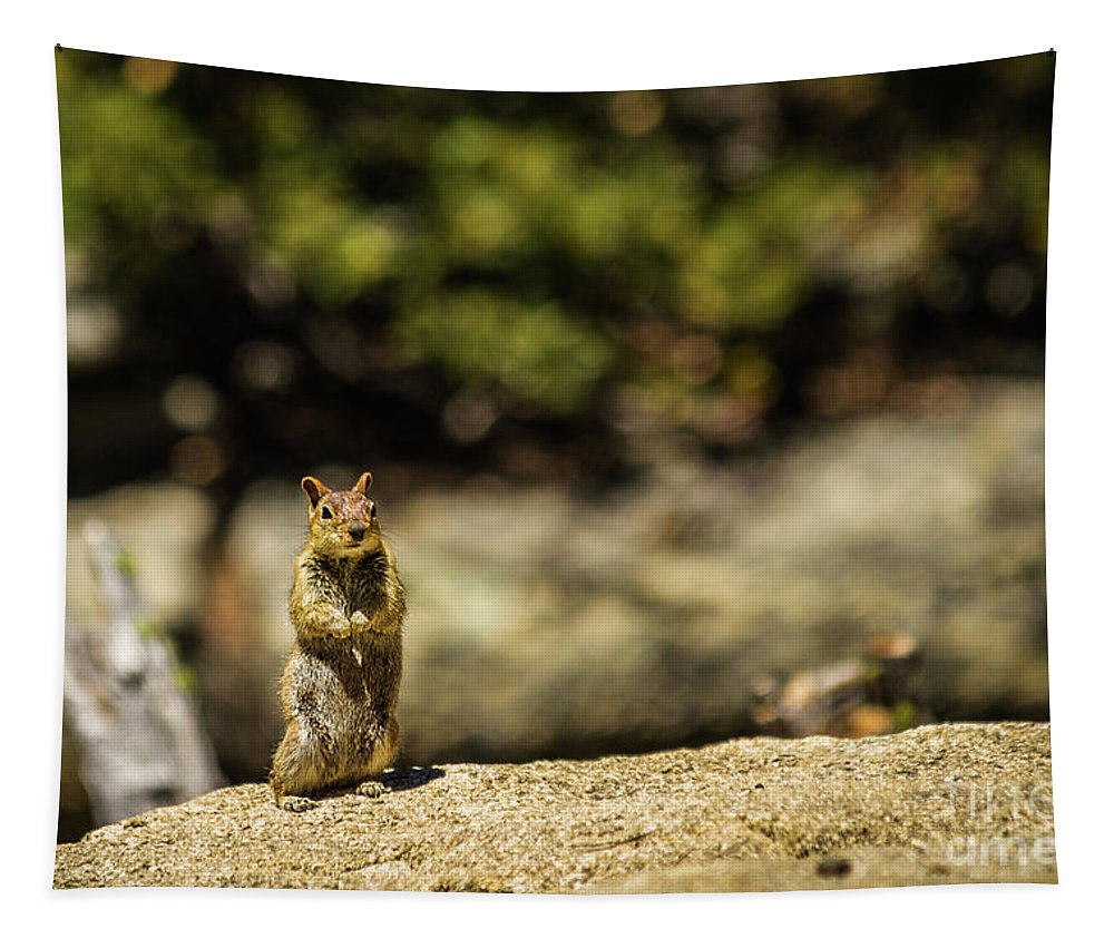 Nature Tapestry featuring the photograph Stand Up by Mirko Chianucci