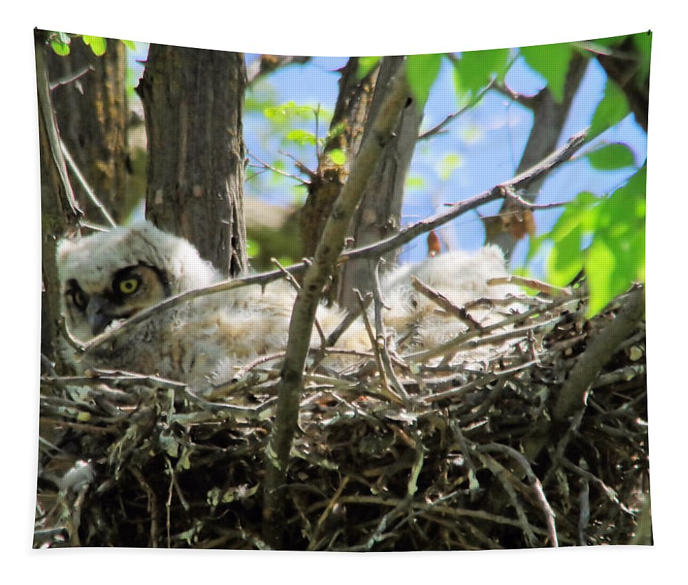 Owl Tapestry featuring the photograph Staring From Its Nest by Jeff Swan