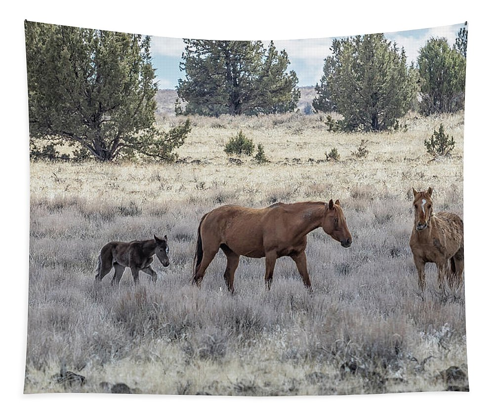 Foal Tapestry featuring the photograph Staying Close To Mama by Belinda Greb