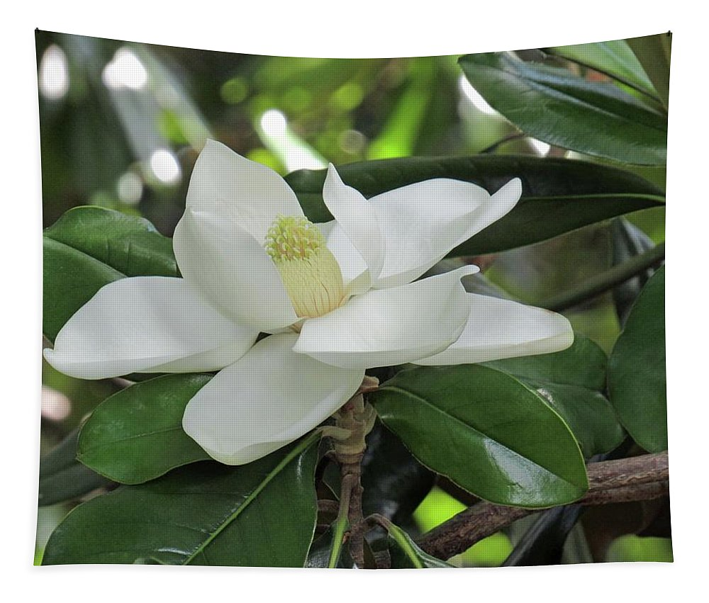 Magnolia Tapestry featuring the photograph Steel Magnolia 39 by Pamela Critchlow