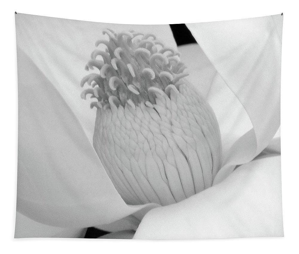 Magnolia Tapestry featuring the photograph Steel Magnolia 46 - Bw by Pamela Critchlow