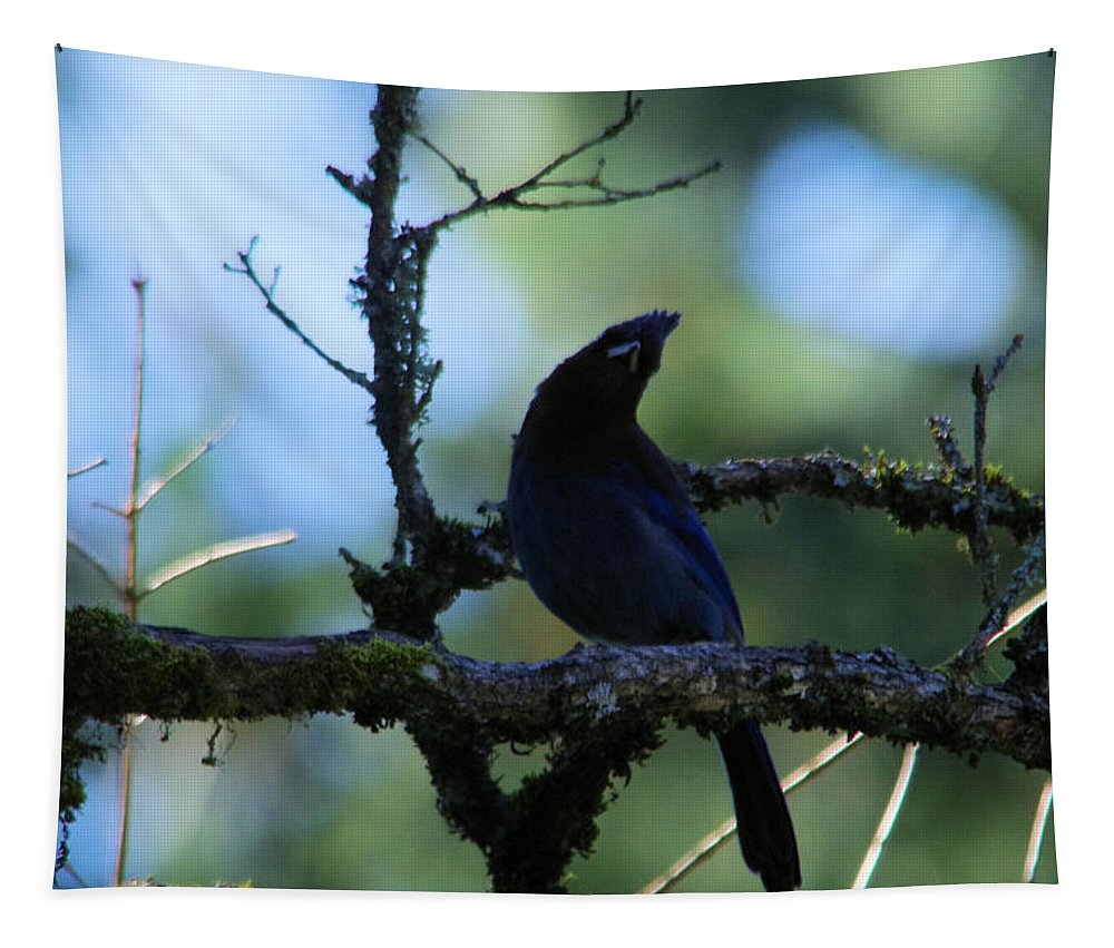 Blue Jay Tapestry featuring the photograph Stellar Jay Tilts Its Head by Jeff Swan