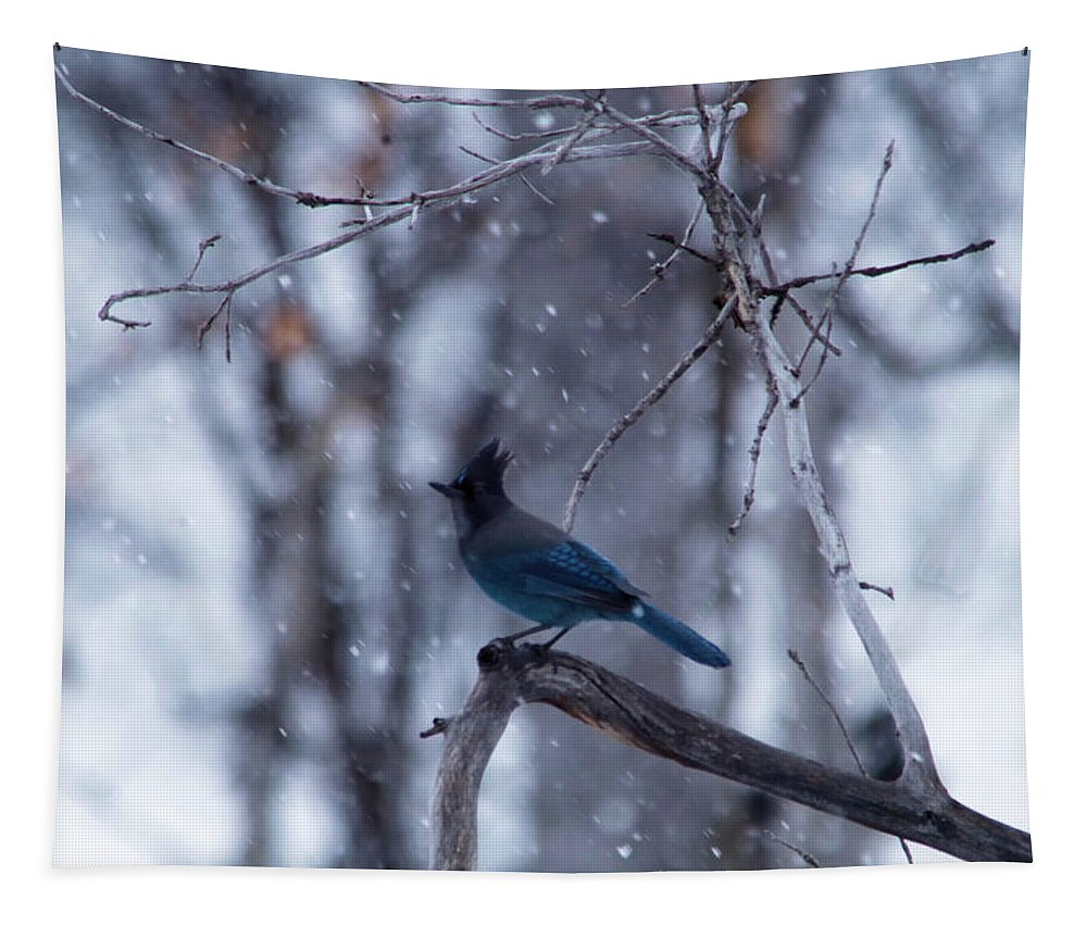 Jay Tapestry featuring the photograph Steller's Jay In Snowfall by Jeff Swan