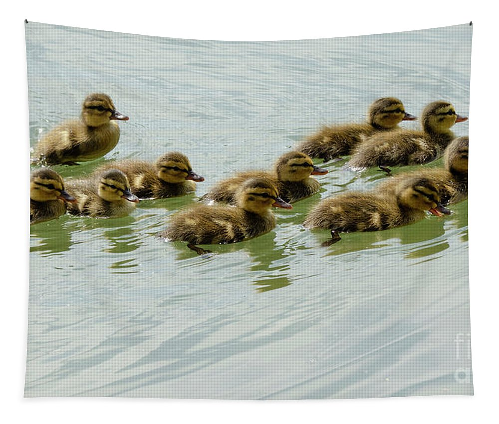 Baby Tapestry featuring the photograph Stick Together Guys by Bob Christopher