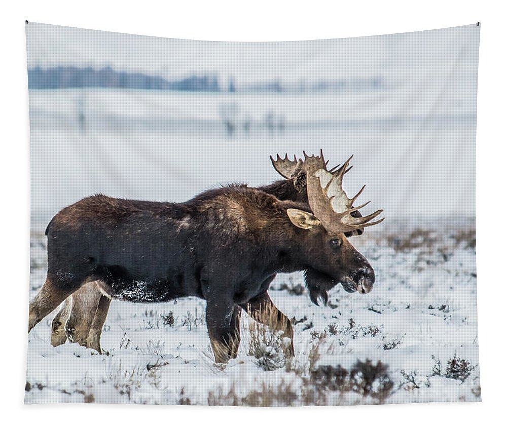Moose Tapestry featuring the photograph Sticking Together by Yeates Photography