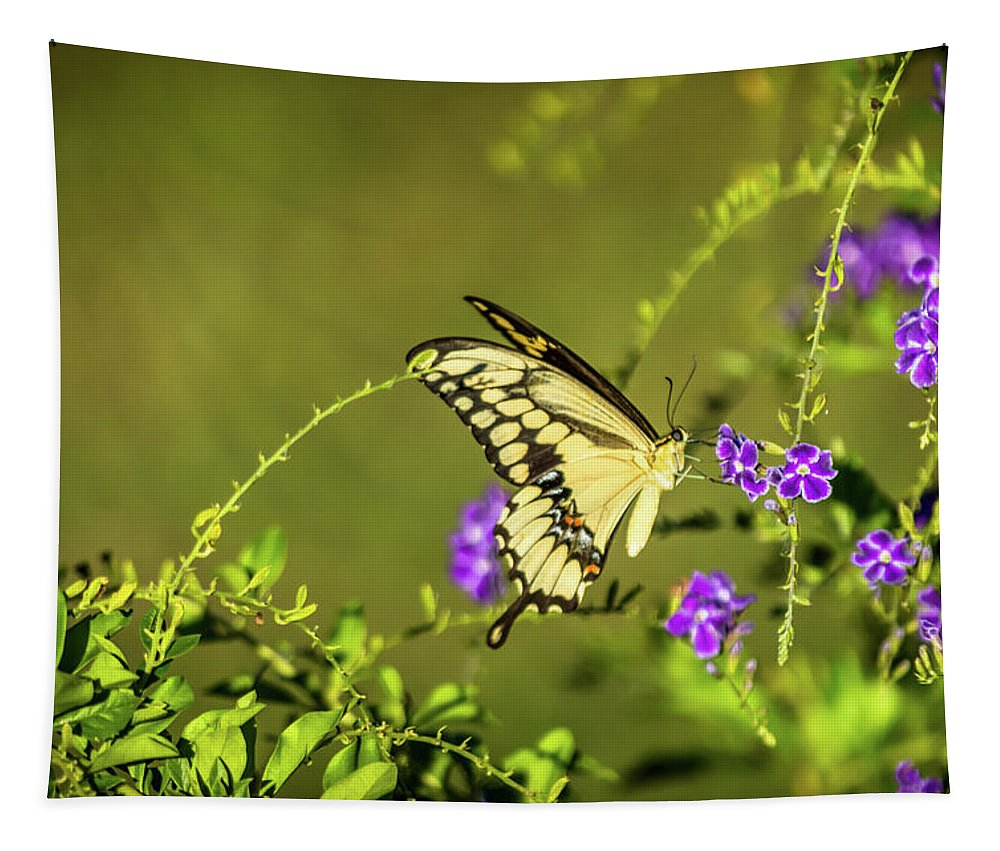 Butterfly Tapestry featuring the photograph Stopping In For Dinner by Leticia Latocki