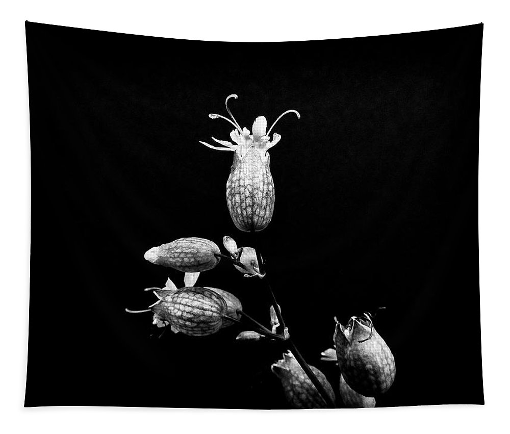 Black And White Tapestry featuring the photograph Strange Kind Of Beautiful by Karen Stahlros