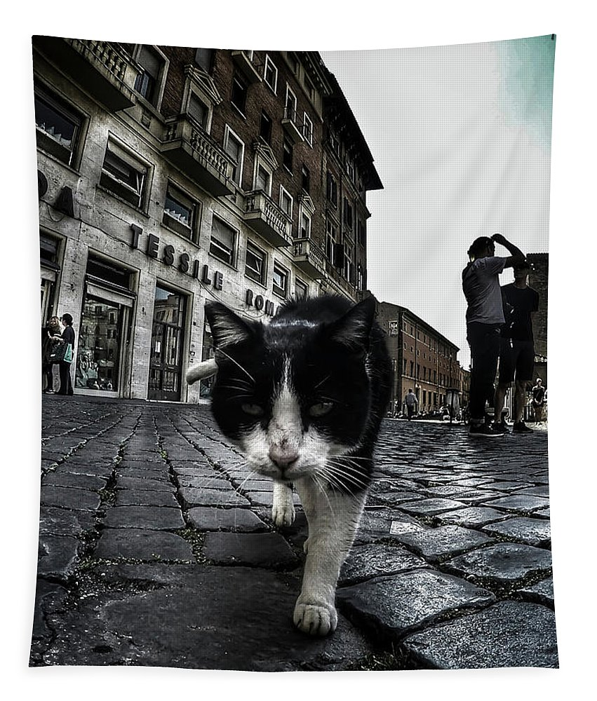 Cat Tapestry featuring the photograph Street Cat by Nicklas Gustafsson