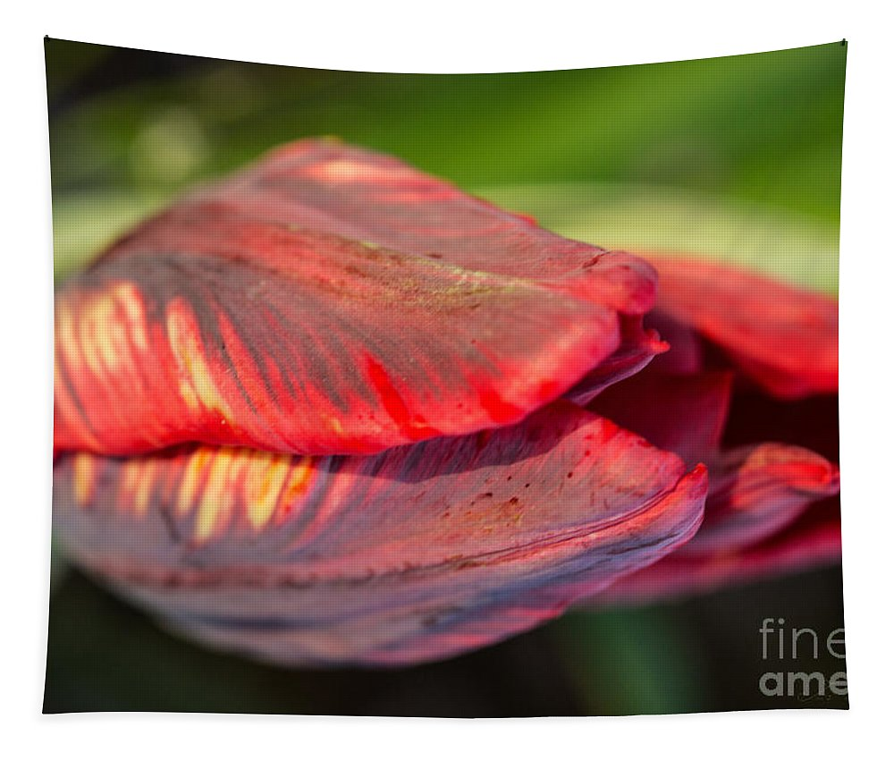 Iris Holzer Richardson Tapestry featuring the photograph Striped Red Tulip by Iris Richardson