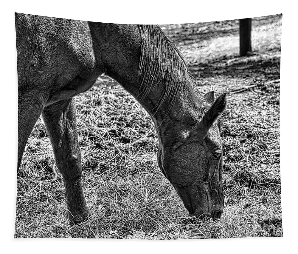 Horse Tapestry featuring the photograph Study Of A Horse by Karin Everhart
