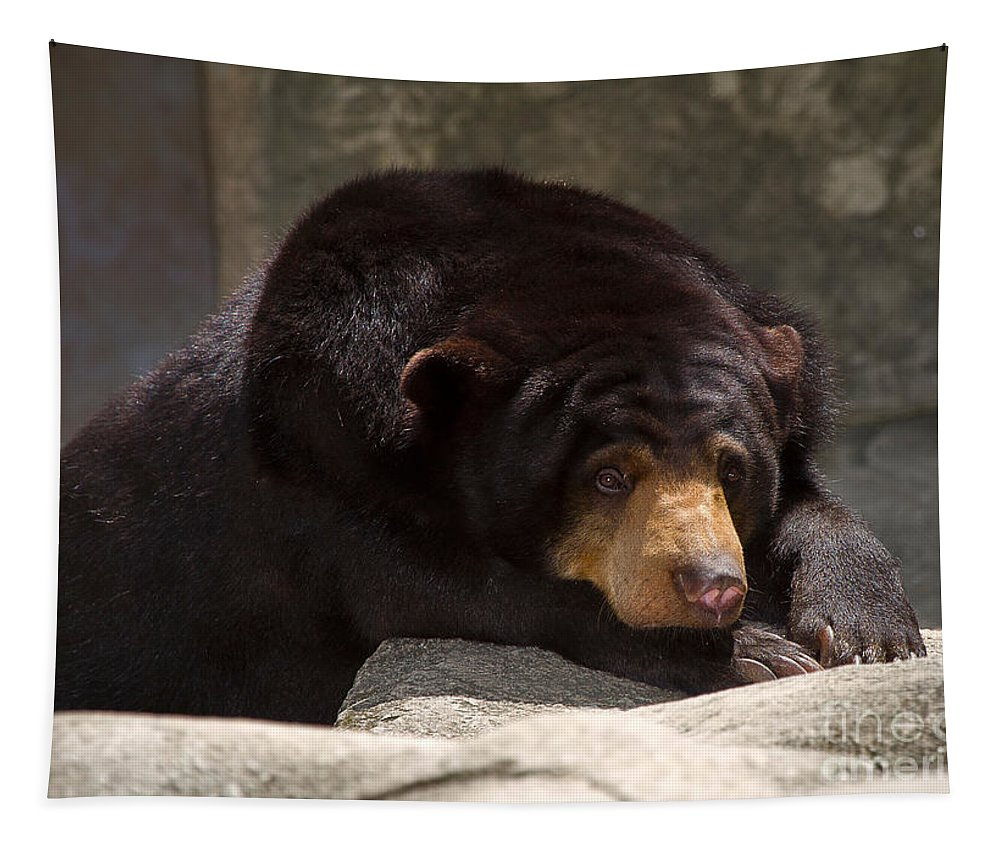 Animal Tapestry featuring the photograph Sun Bear by Louise Heusinkveld