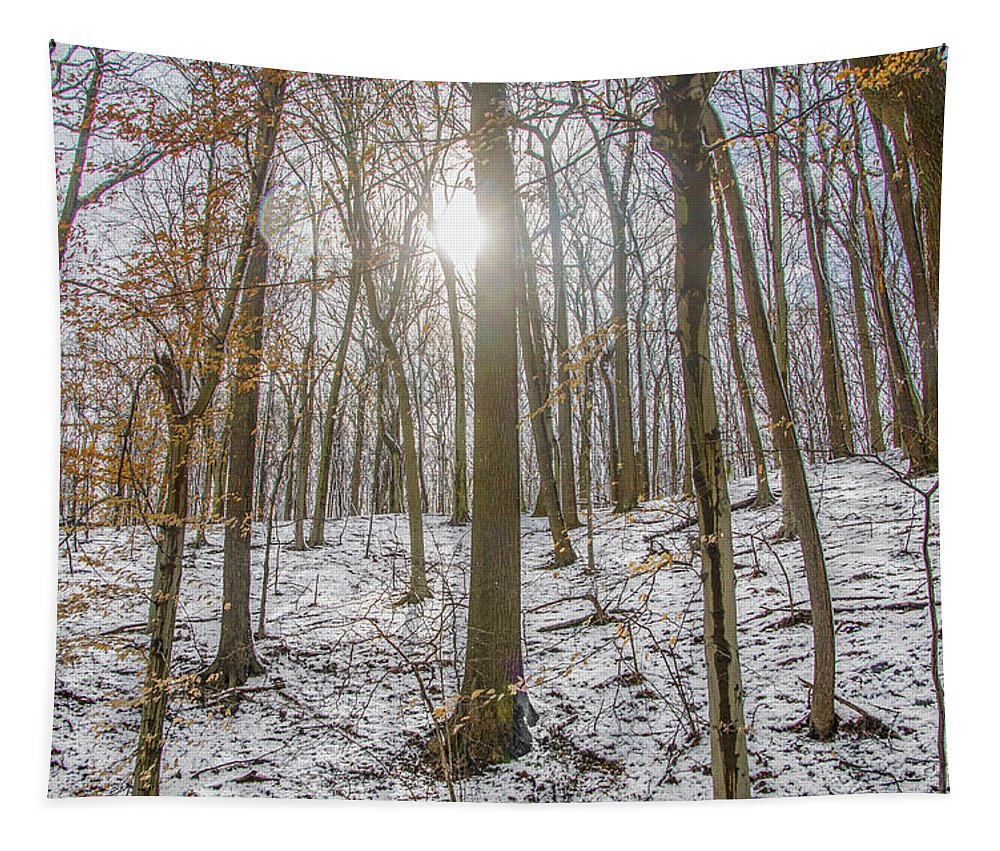 Sun Tapestry featuring the photograph Sun Peaking Through The Trees - Fairmount Park by Bill Cannon