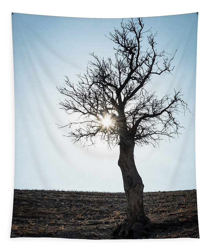 Inspiration Tapestry featuring the photograph Sun Rays And Bare Lonely Tree by Michalakis Ppalis