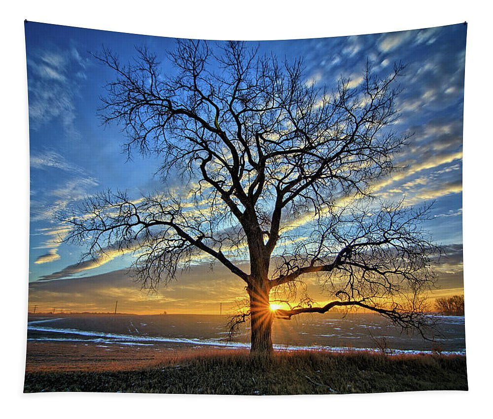 Tree Tapestry featuring the photograph Sunburst Cottonwood by Bonfire Photography