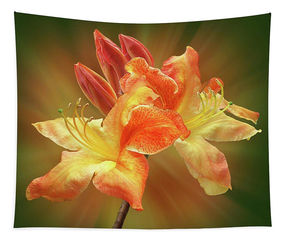 Orange Flower Tapestry featuring the photograph Sunburst Orange Azalea by Gill Billington