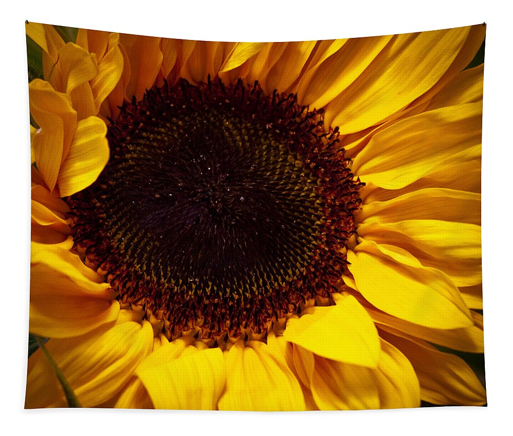 Sunflower Tapestry featuring the photograph Sunflower by David Patterson