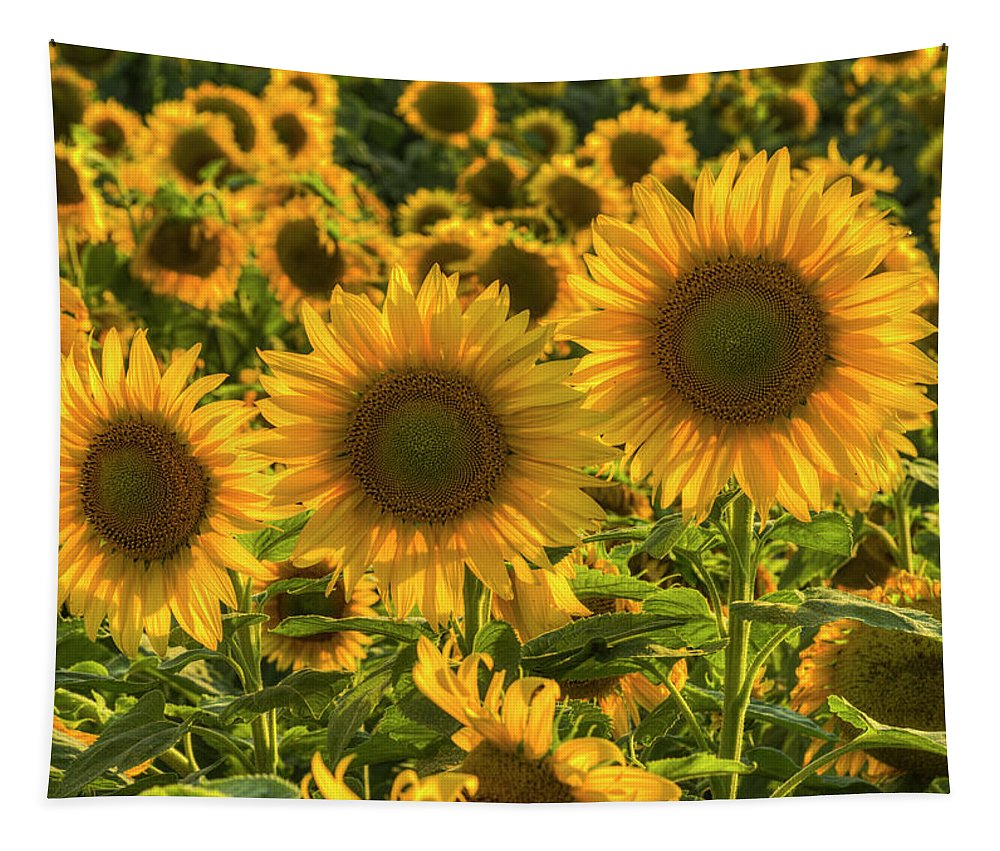 Sunflower Tapestry featuring the photograph Sunflower Family by Mark Kiver