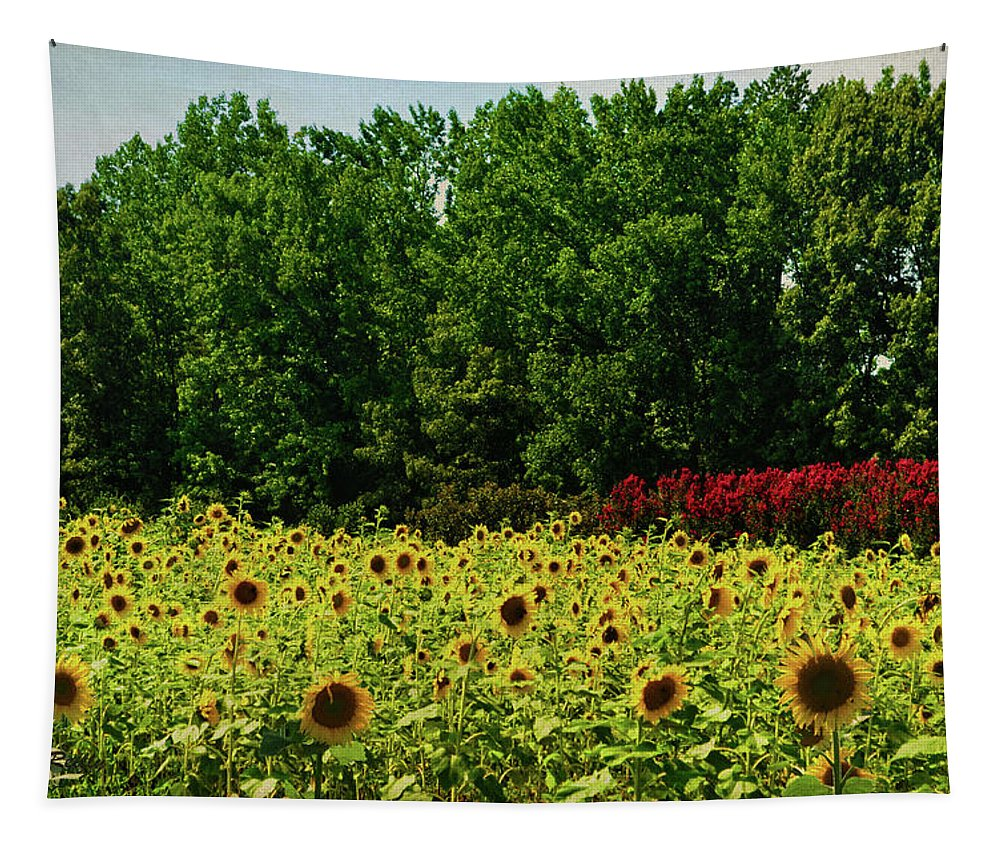 Sunflower Field Tapestry featuring the photograph Sunflower Field by Sandi OReilly