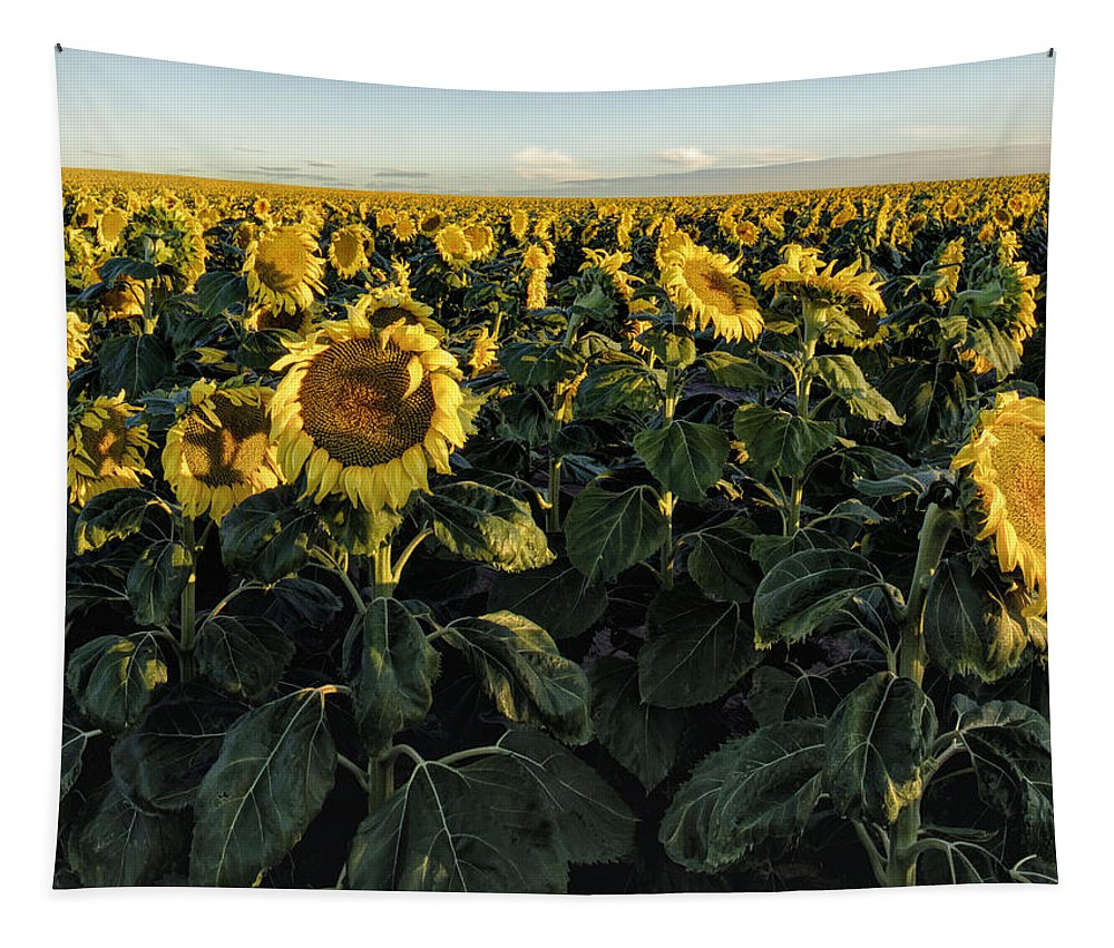 Artolena Photography Tapestry featuring the painting Sunflower Fields by OLena Art Brand