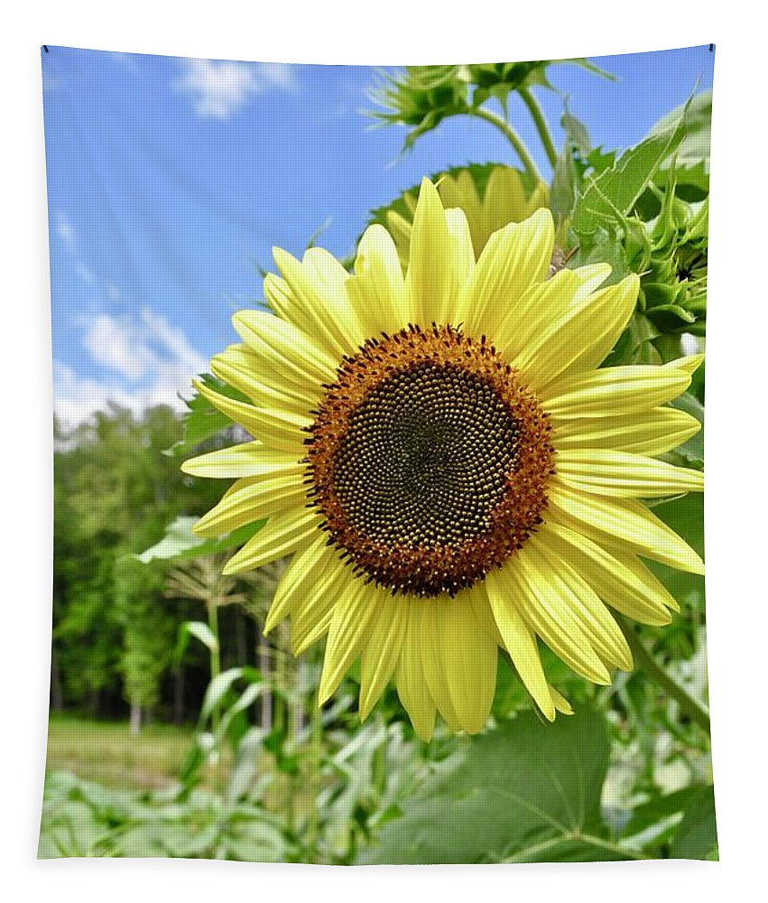 Sunflower Tapestry featuring the photograph Sunflower by Linda Covino