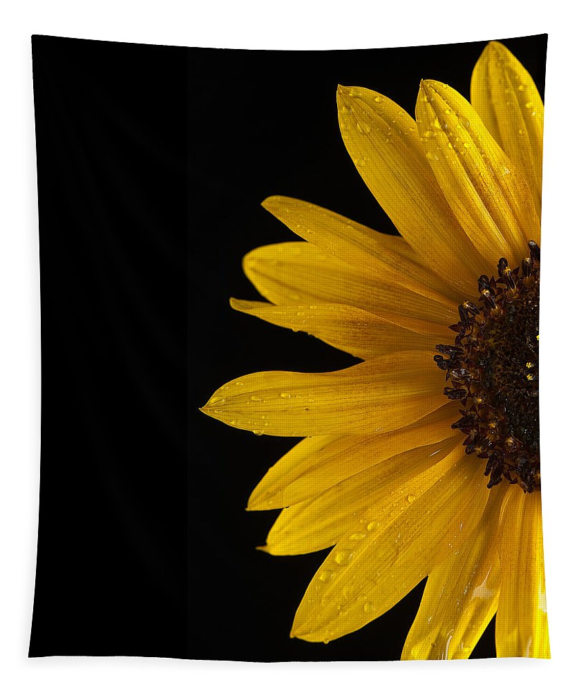 Sunflower Tapestry featuring the photograph Sunflower Number 3 by Steve Gadomski