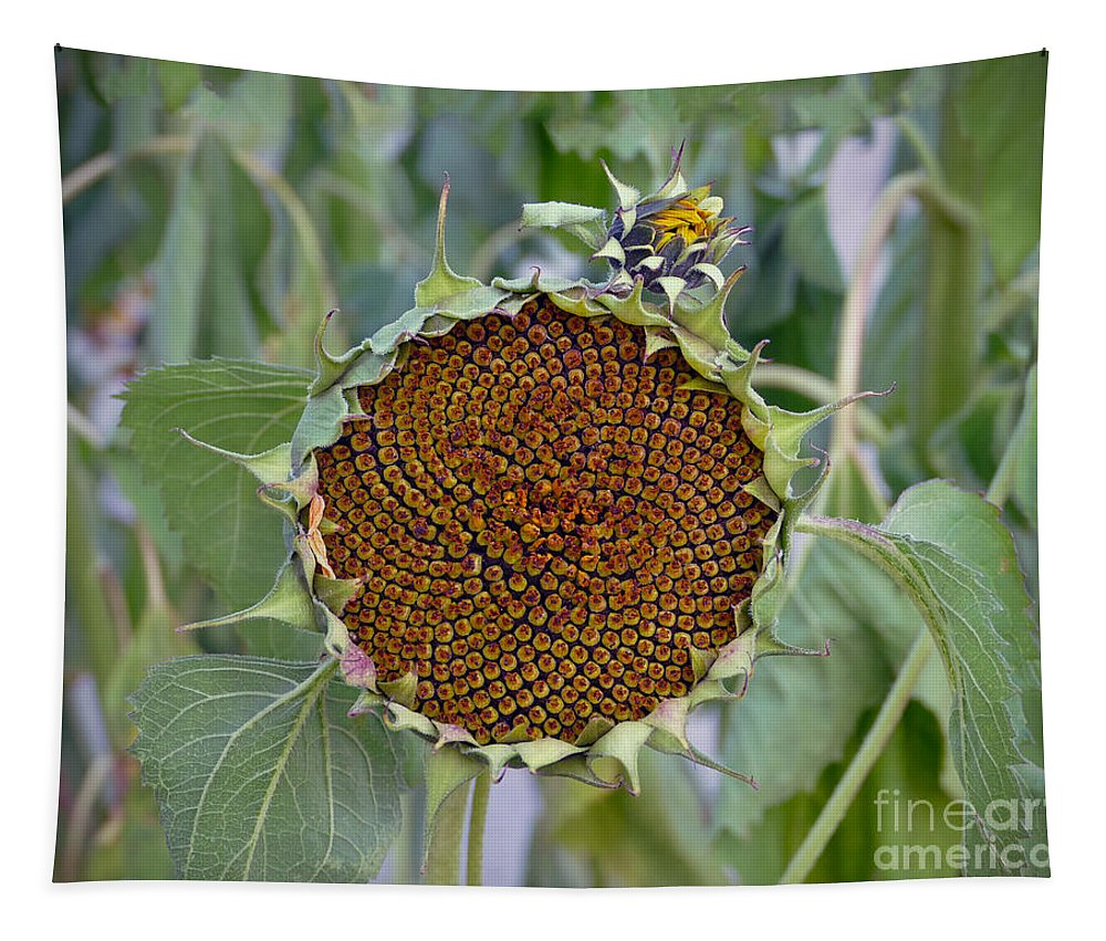 Helianthus Annuus Tapestry featuring the photograph Sunflower Seedhead by Catherine Sherman