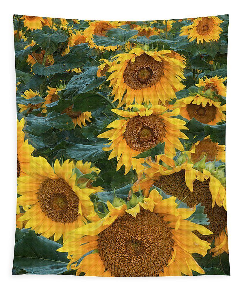 Sunflower Tapestry featuring the photograph Sunflowers by Steve Gadomski