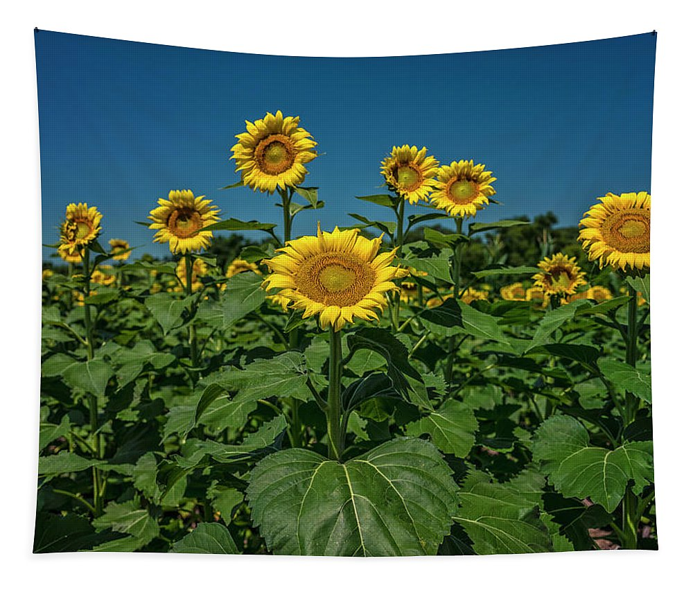 Landscape Tapestry featuring the photograph Sunflowers Weldon Spring Mo Ver1_dsc9821_16 by Greg Kluempers
