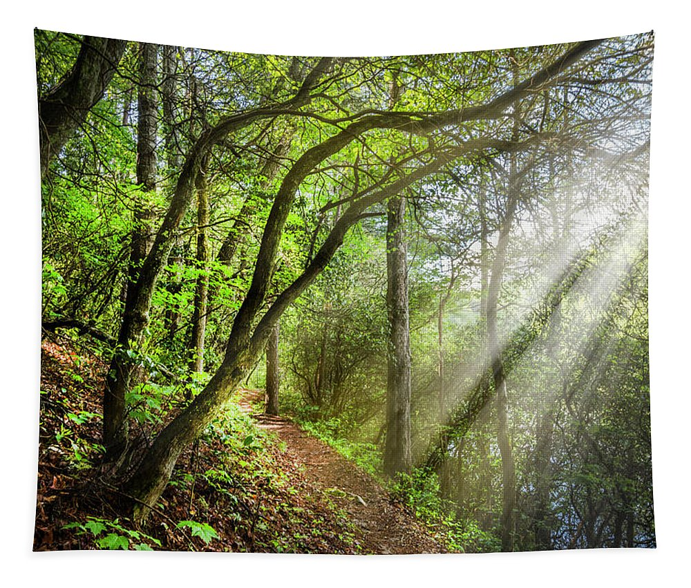 Appalachia Tapestry featuring the photograph Sunlight On The Trail by Debra and Dave Vanderlaan