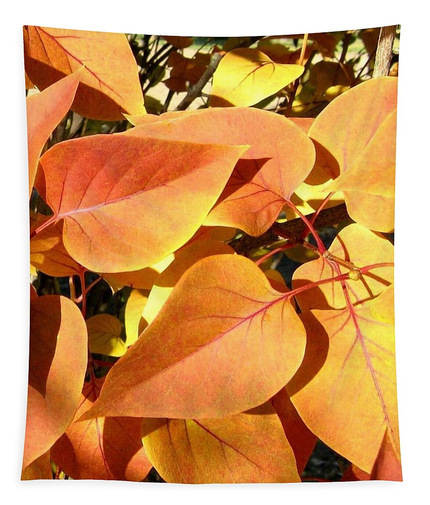Autumn Tapestry featuring the photograph Sunlit Fall Lilac by Will Borden