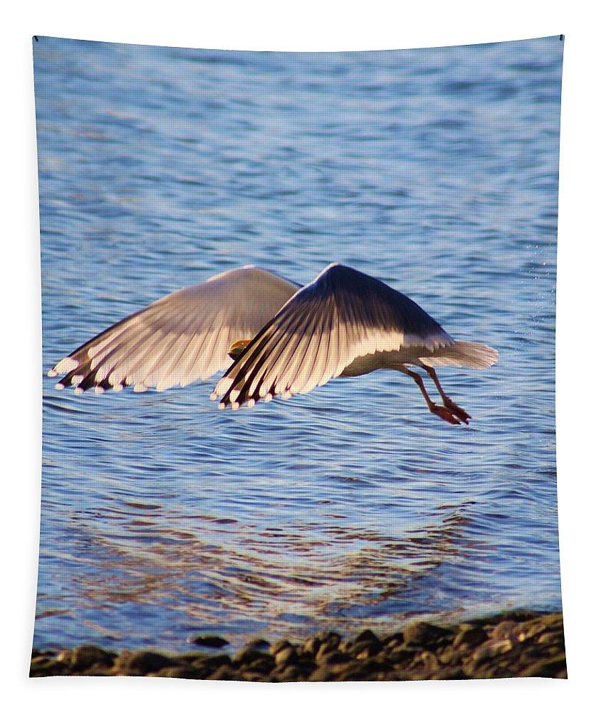 Karen Silvestri Tapestry featuring the photograph Sunlit Gull Wings by Karen Silvestri