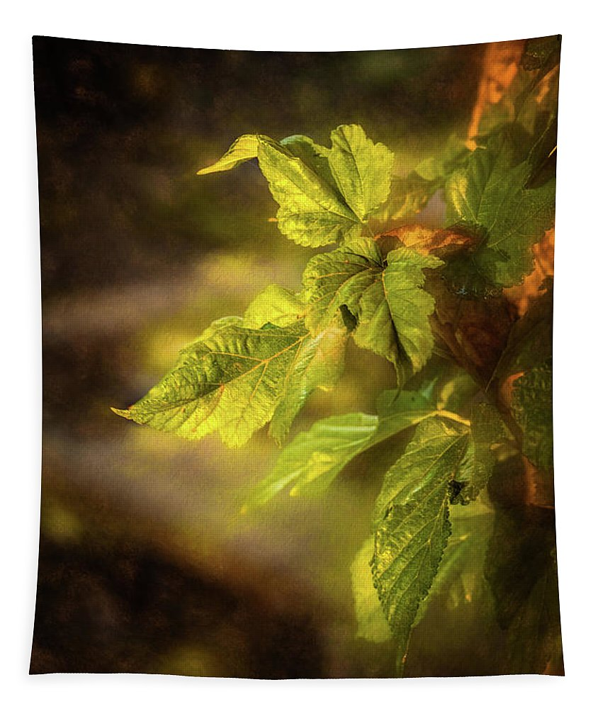 California Tapestry featuring the photograph Sunlit Leaves by Wendy Elliott