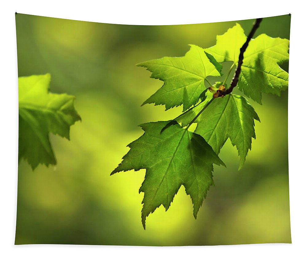 Leaves Tapestry featuring the photograph Sunlit Maple Leaves In Spring by Christina Rollo