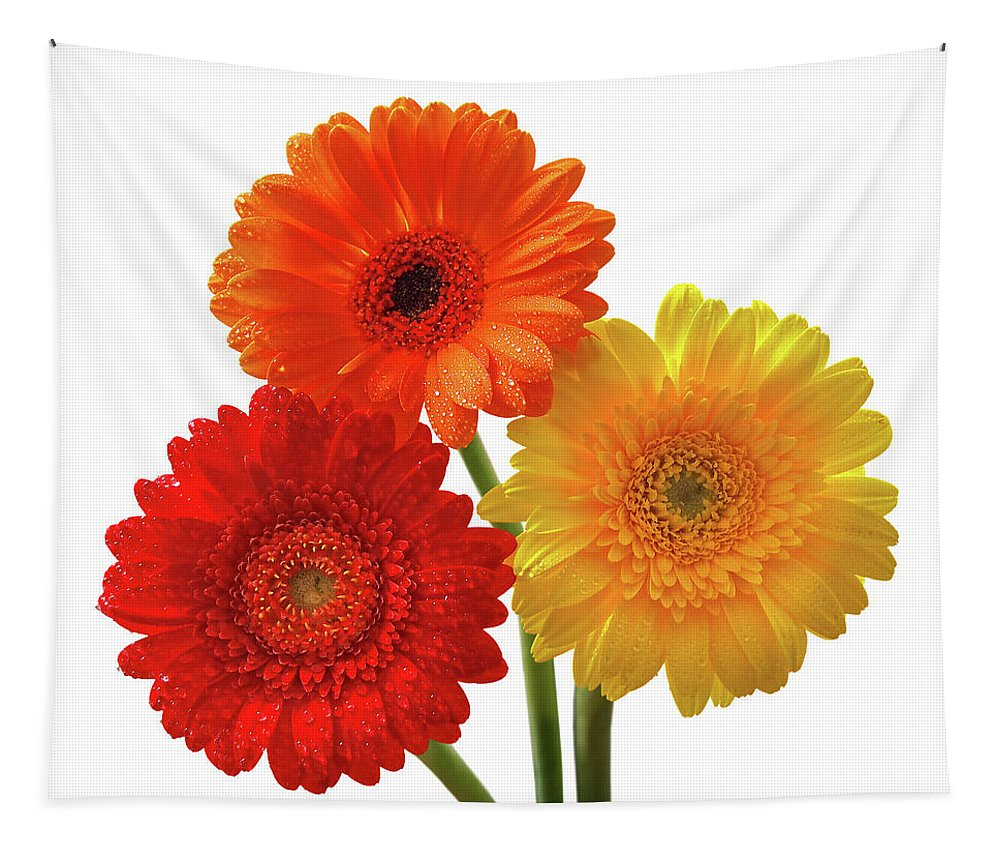 Gerbera Tapestry featuring the photograph Sunny Gerbera On White by Gill Billington