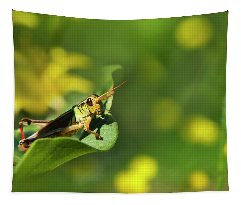 Grasshopper Tapestry featuring the photograph Green Grasshopper by Christina Rollo