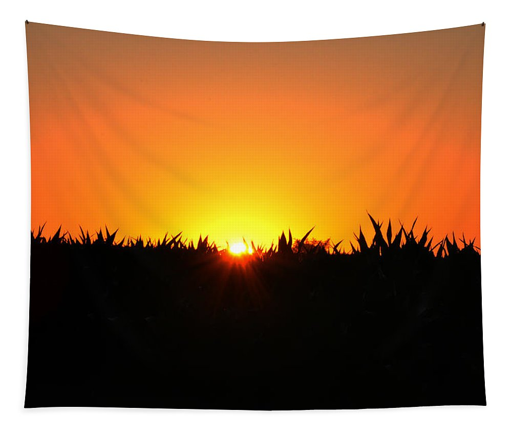 Sunrise Tapestry featuring the photograph Sunrise Over Corn Field by Bill Cannon