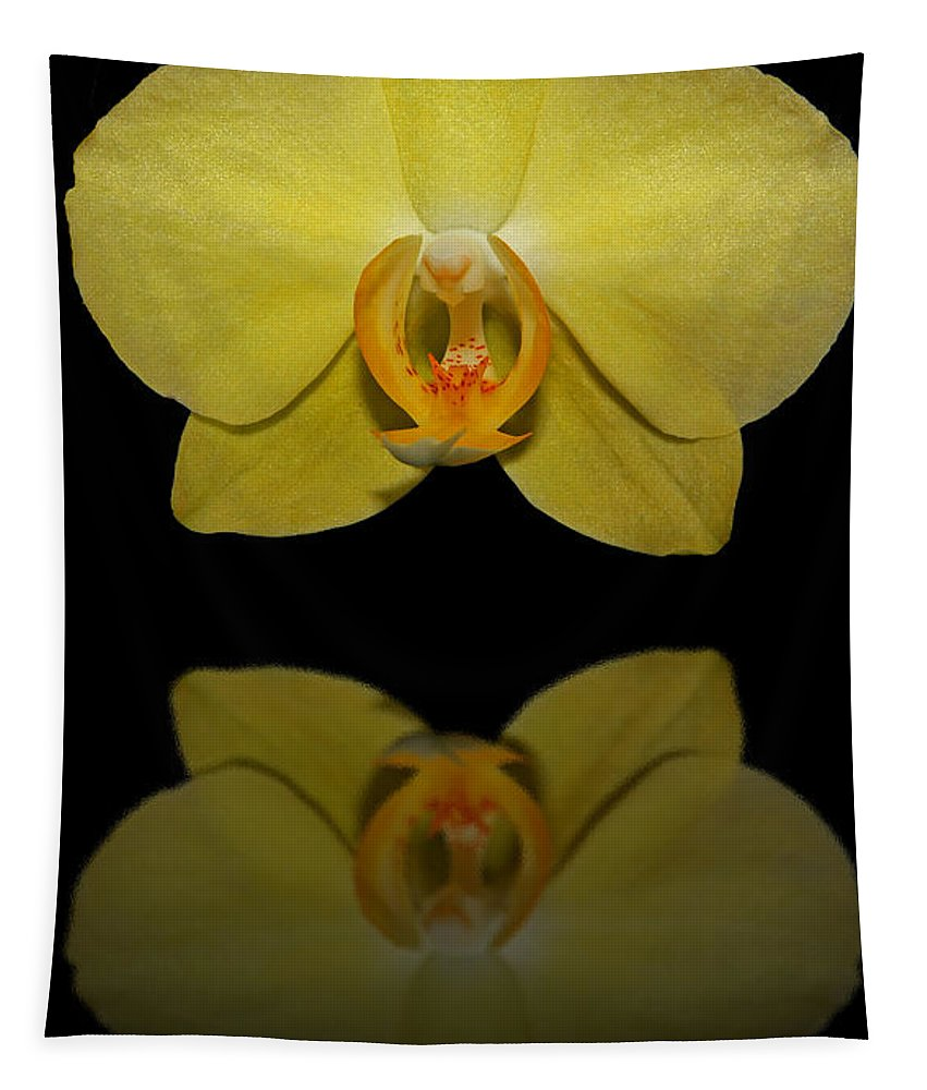 Orchid Tapestry featuring the photograph Sunshine Reflection by Judy Vincent