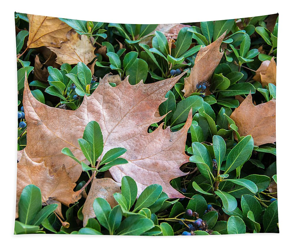Leaf Tapestry featuring the photograph Surrounded Leaf by Robert VanDerWal