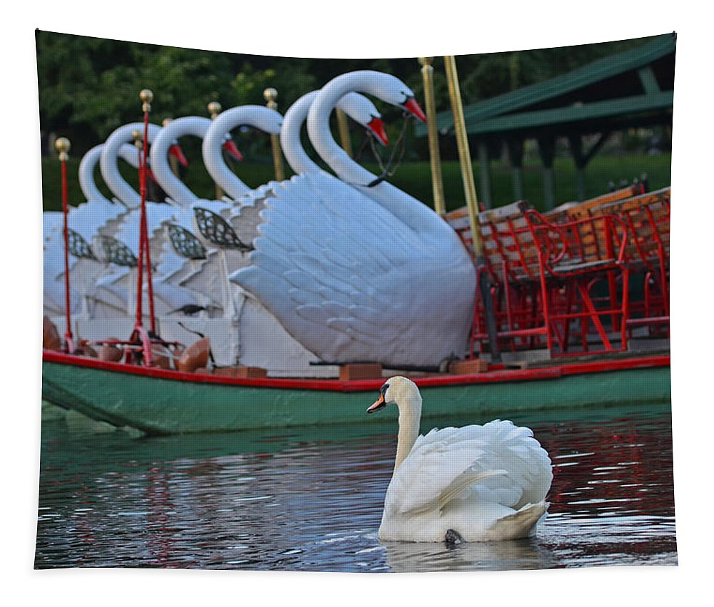 Boston Tapestry featuring the photograph Swan Meeting Up With Some Friends by Toby McGuire